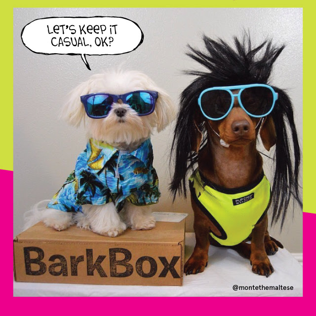 barkbox 1