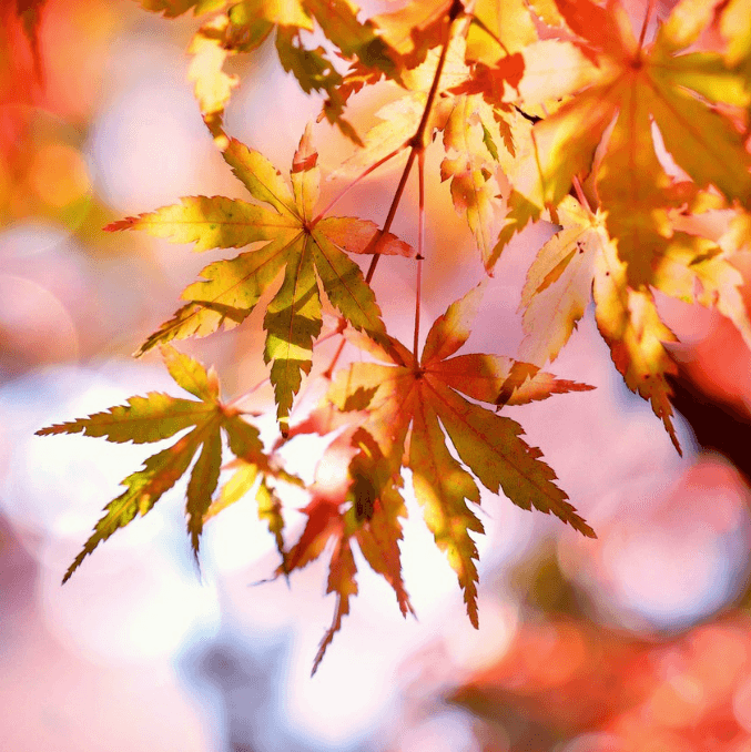 7 Autumn Emails to Get You Ready for Fall