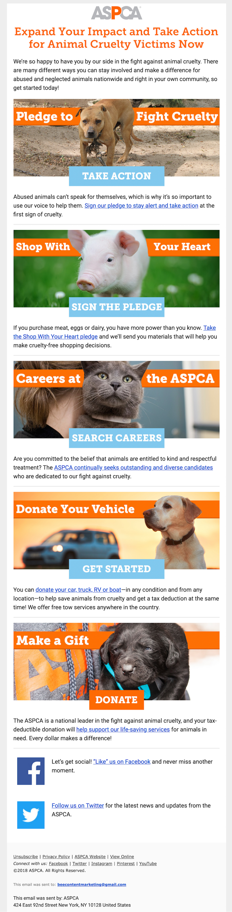 nonprofit email design example